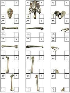 Bone Barter