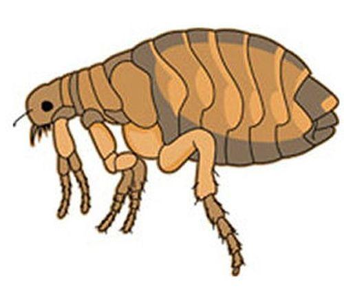 Flea (fan expansion for Hive)
