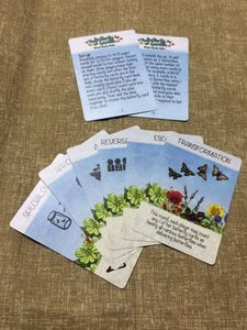 The Butterfly Garden: Event Cards