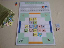 The Garden Bird Game